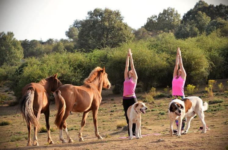 Yoga con caballos.jpg