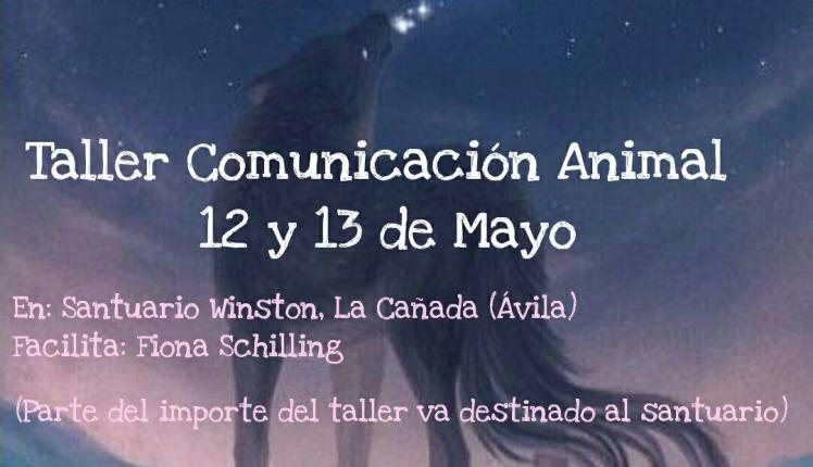 comunicacion animal avila santuario caballos