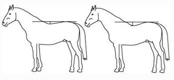 kissing spine horses 2