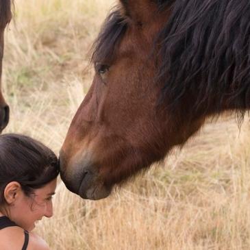 Experiencia caballos santuario Winston foto Paula Barco