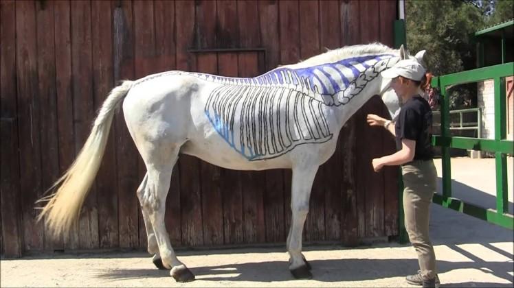 escuela del caballo