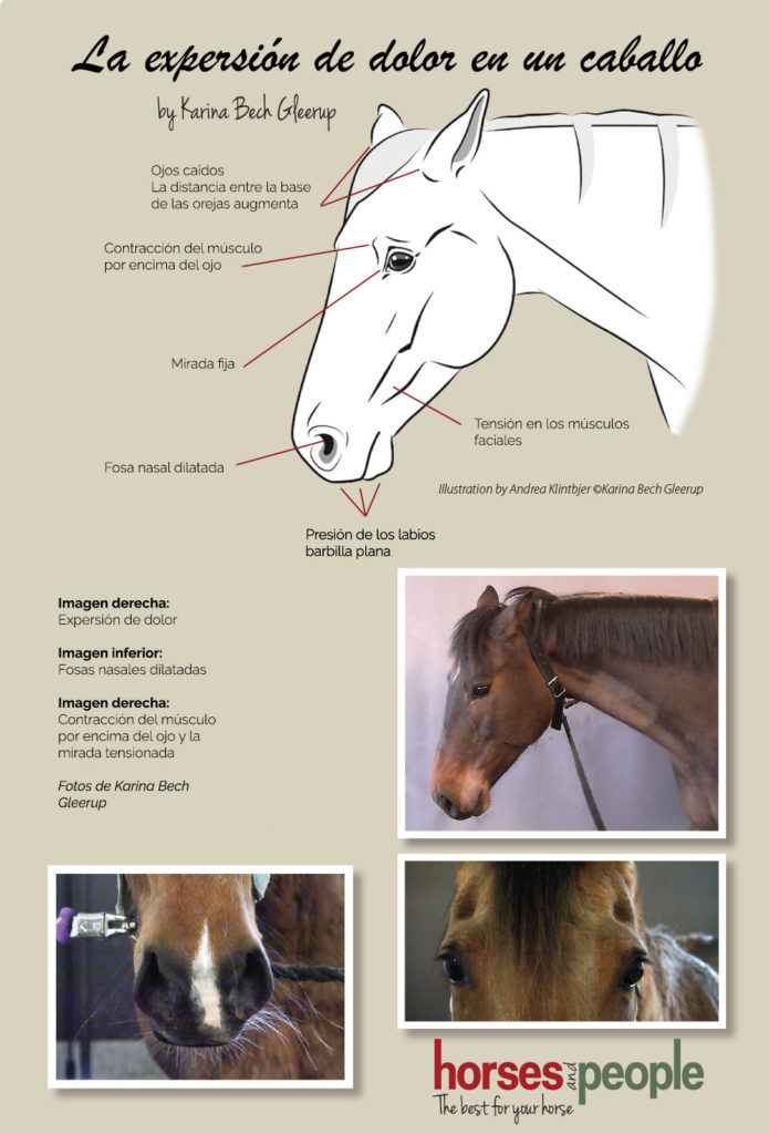 expersion-dolor-caballo