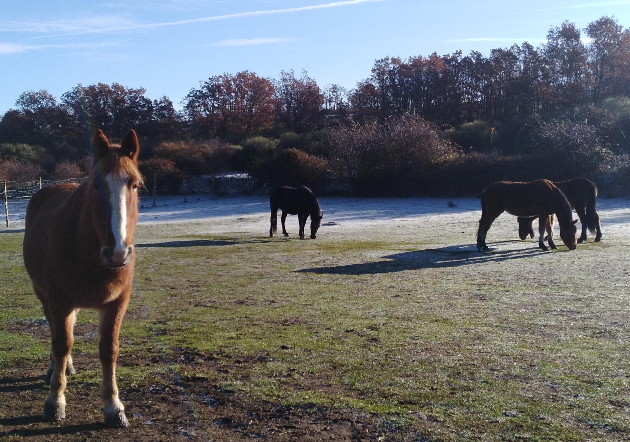 caballo asustado santuario winston conciencia equina