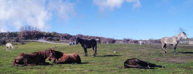 caballos relajados santuario winston