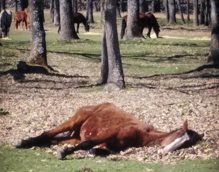 cama de hojas secas caballo