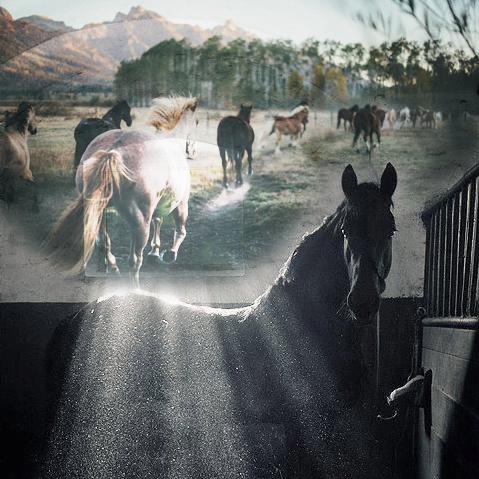 sueños equinos